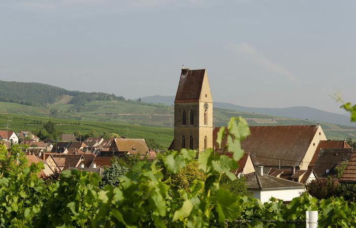 Visite avec dégustation de 5 vins + Kugelhopf 8,00€