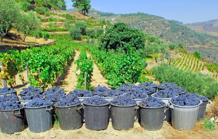 Détendez-vous Douro: Profitez de la vallée 100€