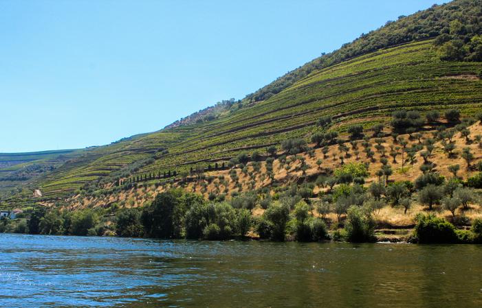 Winetour: Journée dans le Douro: 2 vignobles 100,00€
