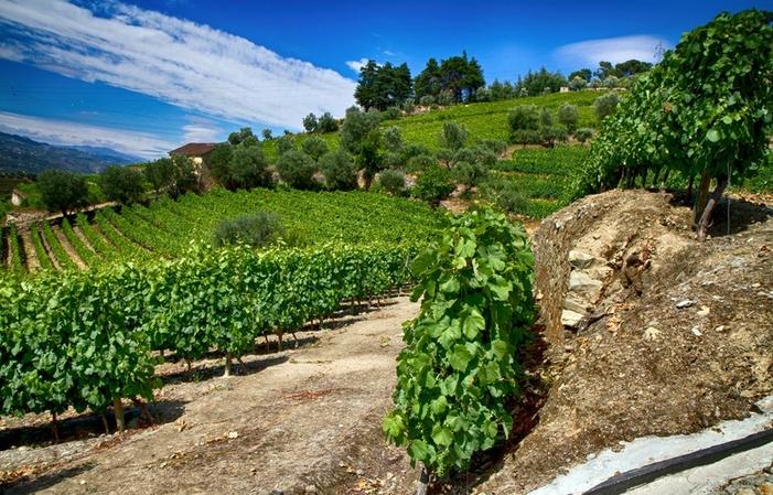 Winetour: Journée dans le Douro: 2 vignobles 100€