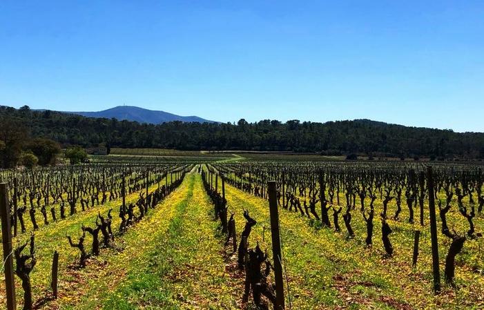 Live winegrowers vendita 14,00€