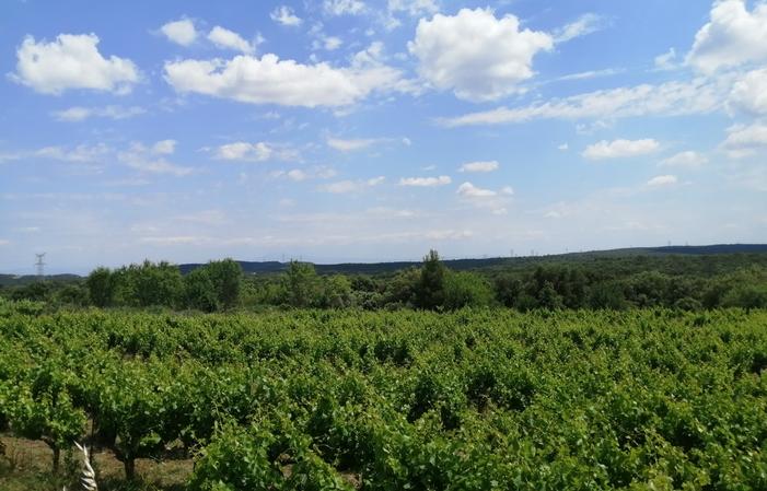 Gite les Garrigues sur propriété viticole 90,00€