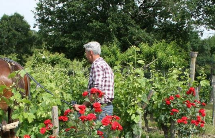 Discovering Organic Viticulture €10.00