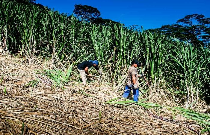 Visit and tastings of the Mana'o Tahiti distillery €1.00