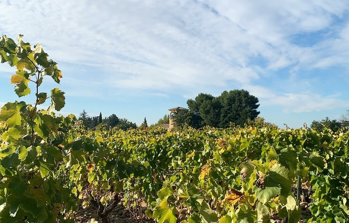 Visit and Tasting at the Château Mont-Redon Cellar €1.00
